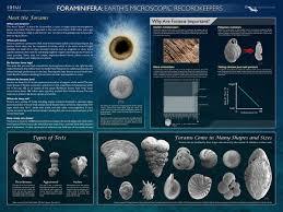 biointeractive forams jpg