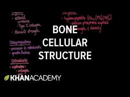 Normal Bone Anatomy And Physiology Cellular Structure Of Bone Video Khan Academy