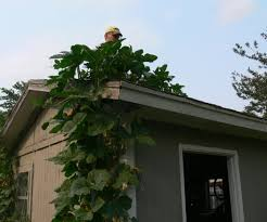 taking your pumpkins all the way to the roof top 10 steps