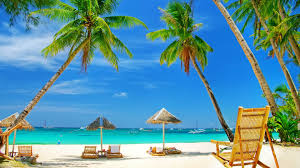 Palm Tree Wallpaper Sunbeds And Palm Trees On A Beach Wallpaper Wallpaper Studio 10