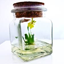 amazon com award winning maintenance free orchid terrarium