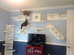 cat wall furniture cat wall climbing systems a tale of two kitties and their cat wall