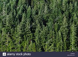 Wildfire Ladysmith Bc by Forestry Canada Bc Stock Photos U0026 Forestry Canada Bc Stock Images