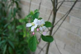 24 best native iowa plants images on pinterest native plants planning an orchard for your homestead
