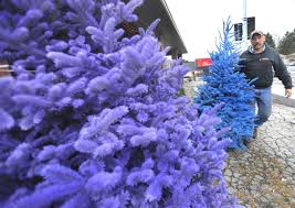 Christmas Trees Oh Christmas Trees Buyers Have More Options Including Colors