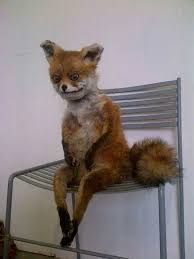 Taxidermy Fox Meme - when you wake up early in the morning and sit on your bed like
