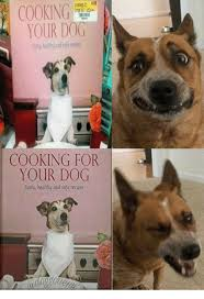 Dog Cooking Meme - cooking your dog tastyhealthy and safe reapes cooking for your dog