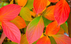 Colors Autumn Colors Excellent Itus Easy Go Outside Stunning Places