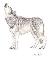 wolf howl sketch by wolfinspirit on deviantart