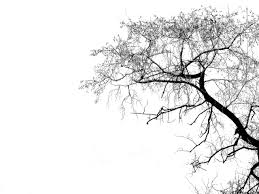 tree silhouette free clip free clip on