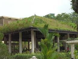 native plants in maryland discover magic city green roofs at the gardens in october al com
