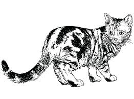 warrior cats coloring pages sad awesome printable warrior cats coloring pages printable free