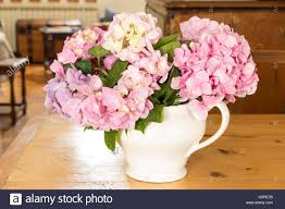 hydrangea flowers on a table in the living room stock photo