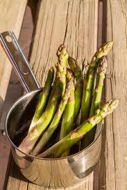 cuisiner asperges vertes fraiches asperges vertes fraîches photographie 931sergeeva gmail com