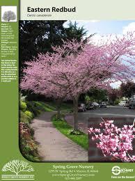 spring grove nursery cercis redbud eastern redbud tree facts