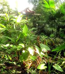 backyards appealing tropical backyard landscaping ideas 44