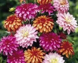 blooms flowers great big greenhouse summer blooming bulbs