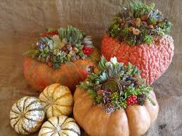 best container garden ideas for fall my greenery life