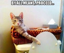 Funny Cat Memes - funny cat memes no privacy with bathroom kitty kitty humor