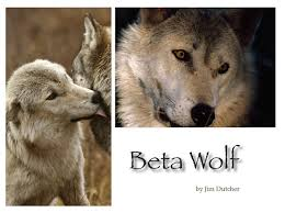 portfolio 3 columns living with wolves