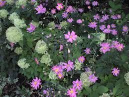 pilea cadierei ezstt pilea plant identificationpotted plantshouse