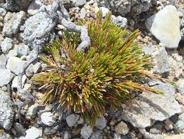 new zealand native plants list t e r r a i n taranaki educational resource research analysis