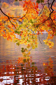 best 25 falling leaves ideas on pinterest autumn leaves falling