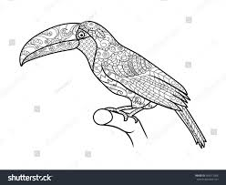 toucan bird coloring book adults vector stock vector 405512506