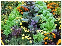 Grow Vegetable Garden by Companion Planting Vegetable Gardening Plant Companions And Combining