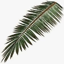 palms for palm sunday worshiping with children year a palm sunday april 13