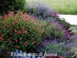 immagini di giardini fioriti angoli di giardino e idee per realizzare aiuole foto giardini
