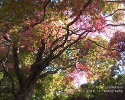 free desktop wallpaper new zealand flowers trees plants nature