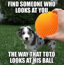 Dog Girlfriend Meme - my girlfriend sent me this picture of our aussie toto and i