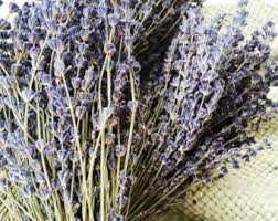 Lavender Decor 250 Stems Lavender One Bunch Preserved Dry English Dry