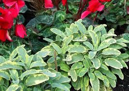 balkon und terrassenpflanzen balkon und terrassenpflanzen 18 images grüne palmenoase home