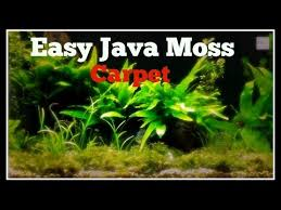 how to create an instant java moss carpet youtube