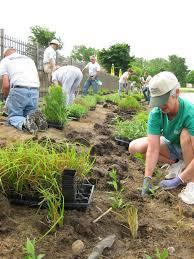 native plant plugs rotary botanical gardens hort blog may 2011