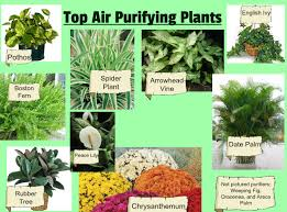 best air cleaning plants recommended by nasa