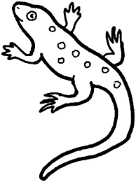 coloring pages graceful lizard coloring pages desert lizard