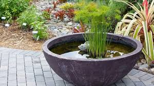 maintenance tips of container water garden mosquito dunk algae