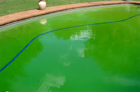 home dzine garden what to do when your pool goes green