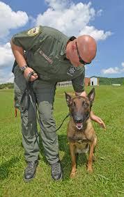 belgian shepherd malinois pronunciation four legged deputies u0027integral part u0027 of fighting crime in sullivan