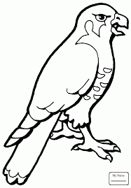 coloring pages birds funny hawk hawks coloringbooks7 com