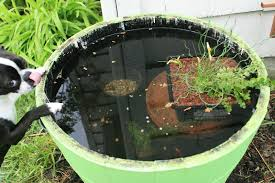 roosevelt kid d i y container fish pond