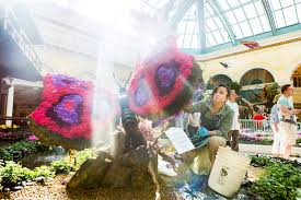 Flowers In Japanese Culture - bellagio conservatory transformed into japanese tea garden for
