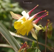 native plant nursery sunshine coast native texas plants my gardener says u2026