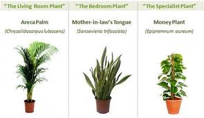 best plants for air quality hot tip the best plants for indoor air quality apartment therapy
