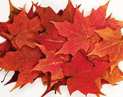 maple leaf etsy