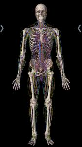 Fundamental Anatomy And Physiology Surviving Gross Anatomy In Medical Mod Med
