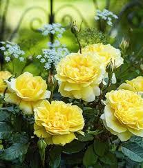 Low Light Outdoor Plants Perennial Flowers Border Sun Shade Perennial Plants Seeds